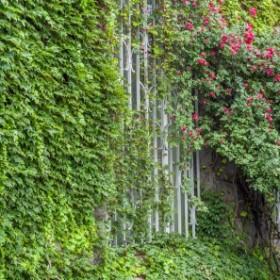 Rośliny zimozielone w naszych ogrodach