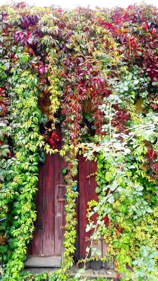 Pozostałe, Jesień w moim ogrodzie