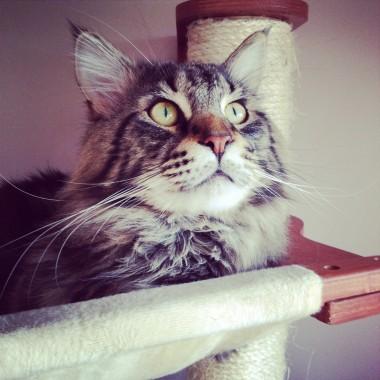 Dzień kota :))