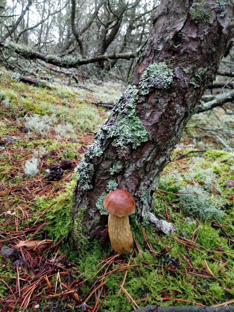 Leśne klimaty, Wspomnienia z wakacji w Kopalinie - Borowik wrzosowy takie lubi środowisko