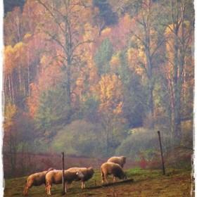 Mistyka listopadowej przyrody &#x3B;