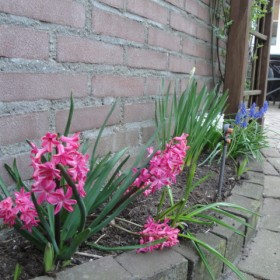 inne kolory wiosny