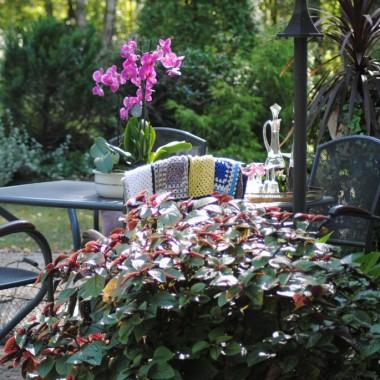 Bajecznie ciepłe lato trwa w najlepsze ,a ja z radością celebruję ciepłe dni i moją labę :) W lasku już jednak trochę widać jesień :(  Liście lecą ,grzyby rosną ,słonko coraz niżej i dni coraz krótsze :( ...jednak póki mogę korzystam z uroków wrześniowego lata i Was również zapraszam :)