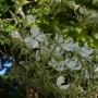 Rośliny, Maj w Ogrodach