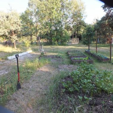 na działce leśnej ,mamy warzywa i drzewka owocowe :)
