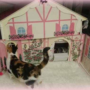 Ryska jej dom i jej przeslodkie kociaki