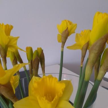 Kwiaty mam dla WAS...