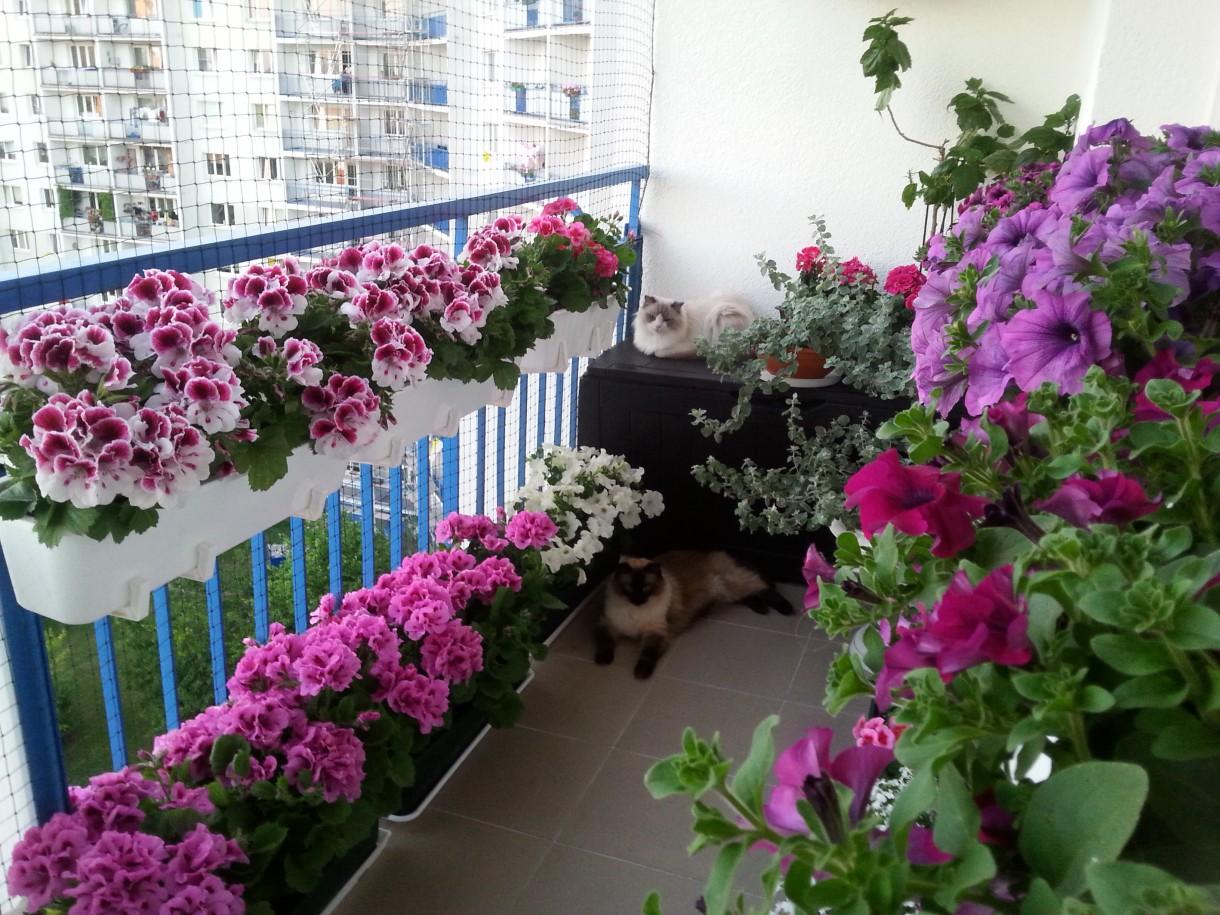 Zdjęcie 1011 W Aranżacji Kolorowy Balkon Deccoriapl