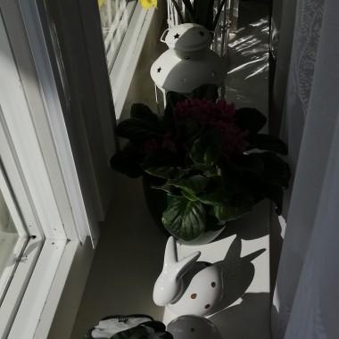 Wiosenny parapet w bratkach
