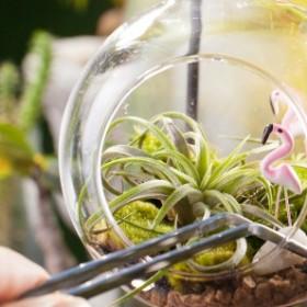 Jak zrobić ogród w terrarium?