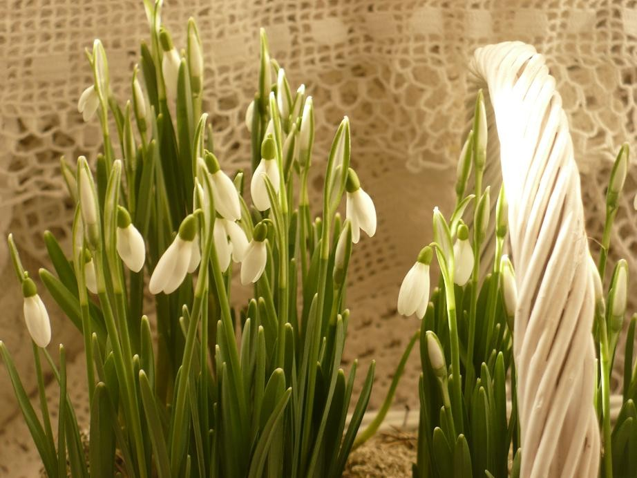 Dekoratorzy, Czekając na wiosnę .................. - .................i przebiśniegowo..................