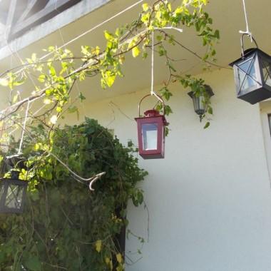 Ogród i kwiaty w czerwcowej osłonie