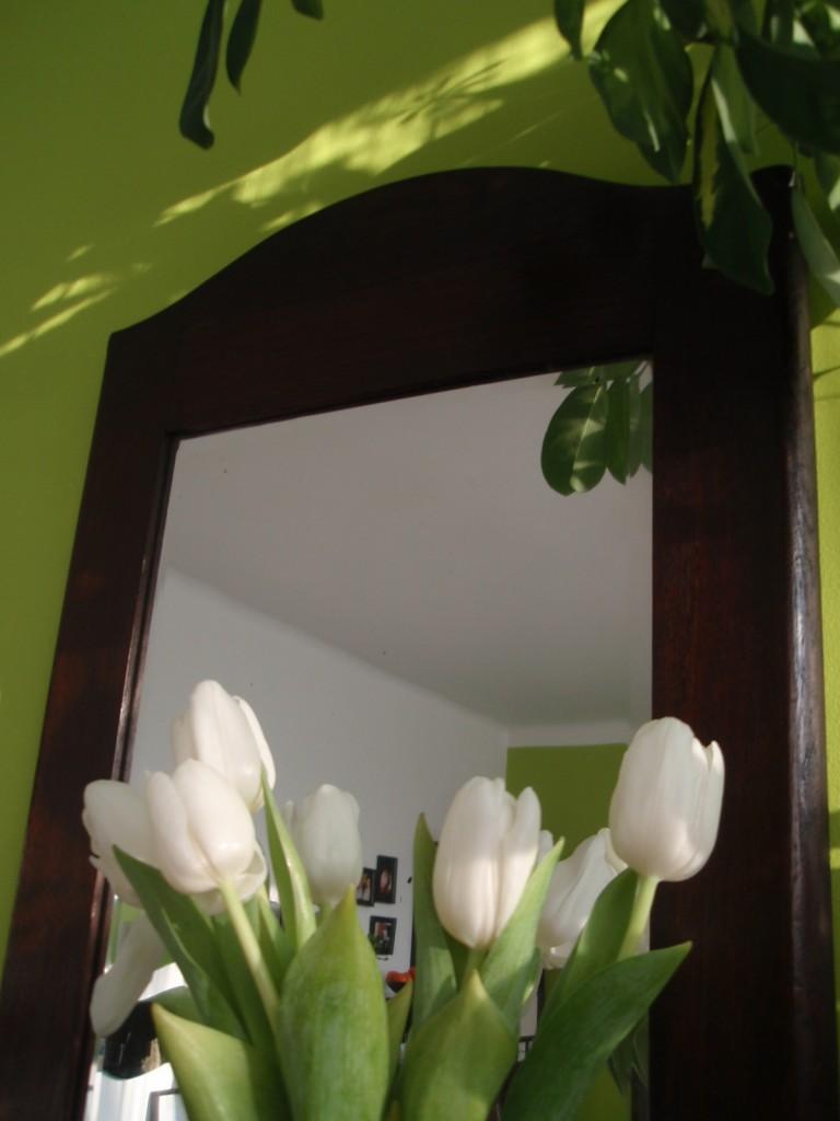Rośliny, Czas na tulipany....