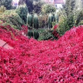 """Jesień w ogrodzie """"Wyjątkowego domu"""""""