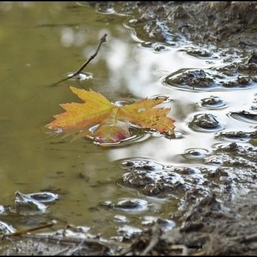 Czy jesień musi być smutna?