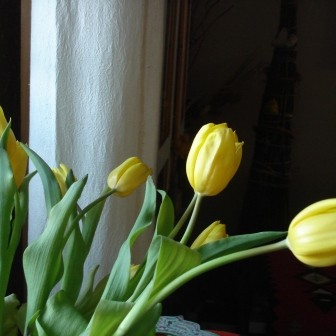 Tulipanowo, kurowo