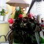 Pozostałe, Balkon - mój prywatny kawałek raju :)