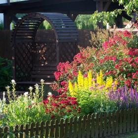 Czerwiec w ogrodzie:)