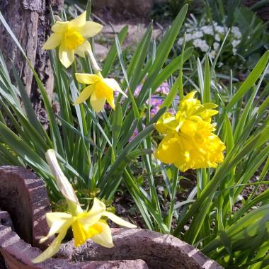 Wiosna cieplejszy wieje wiatr.....