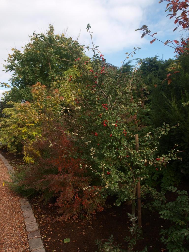 Pozostałe, Barwy jesieni