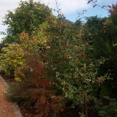 Piękna, kolorowa jesień w Goczałkowickich Ogrodach...
