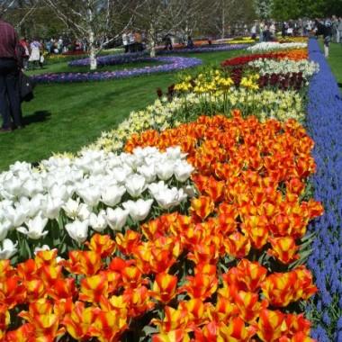 Przedstawiam Wam moją zeszłoroczną  galeryjkę z wycieczki na wystawę tulipanów,i innych wiosennych kwiatów i dekoracji ogrodowych! Uwielbiam tulipanki, więc byłam zauroczona ich pięknem i różnorodnością  &#x3B;-D  Keukenhof 2009Z niecierpliwością czekając na przyjście wiosny, zapraszam do oglądania!!!   &#x3B;-)))