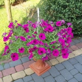 kawałek mojego ogródka