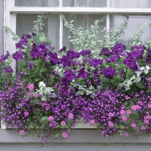 """""""Nie przystawaj dla zbierania kwiatów, by je zachować, ale idź naprzód, a kwiaty będą ciągle kwitnąć na twojej drodze""""."""