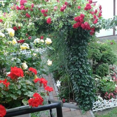 Ogród tego roku.