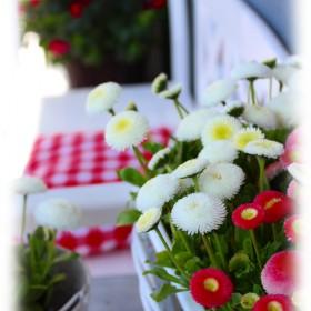 Wiosna, nareszcie:)