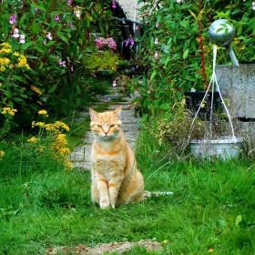 Sprawdzone sposoby na piękny ogród przed domem