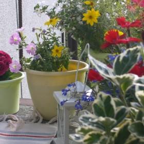 Balkon .. mój mały ogródeczek &#x3B;-)