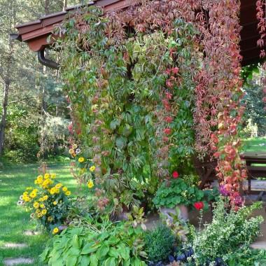 Jesień w moim ogrodzie/tarasie
