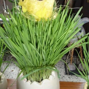 Wiosna w moim ogródku i troszkę dekoracji Wielkanocnych :)