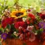 Rośliny, CELEBROWANIE JESIENI...