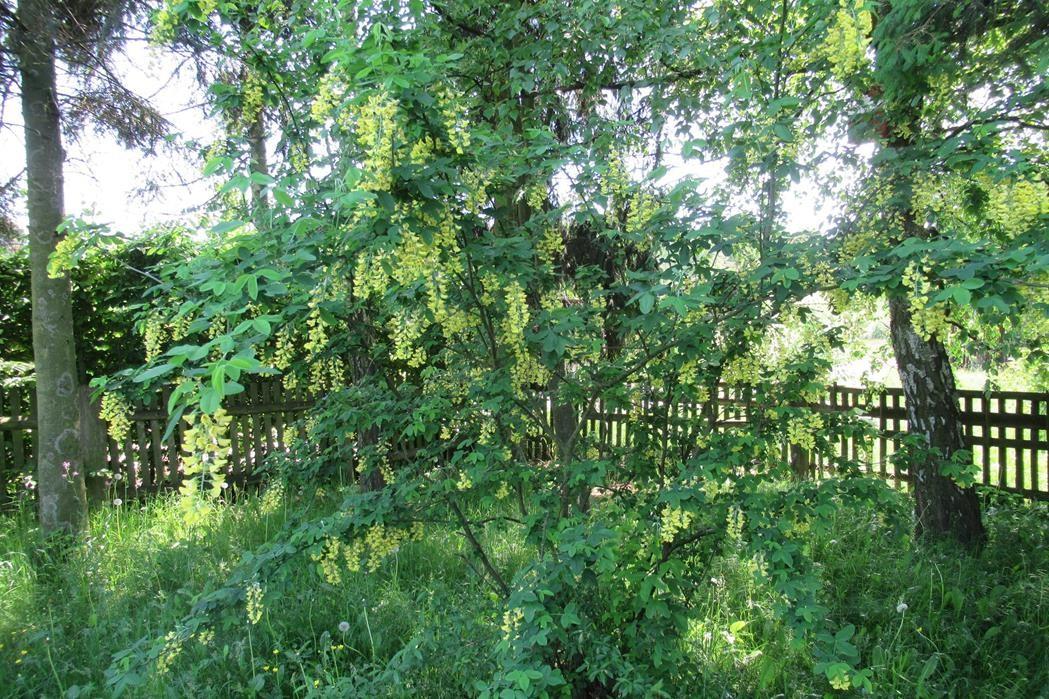 Ogród, Moje ukochane siedlisko. - pp