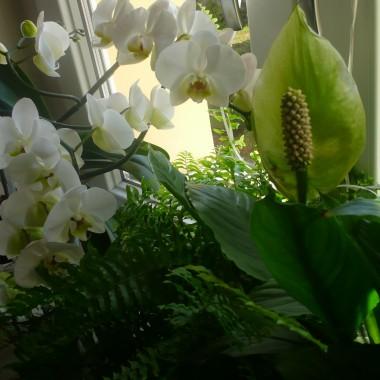 Moje roślinki