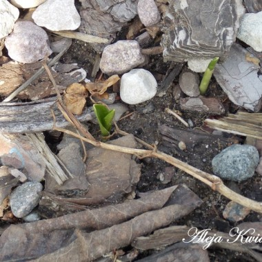 Wiosna na działce - tak już jest !