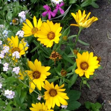 Wreszcie wiosna pełną gębą.Nie wiem czy się ze mną zgodzicie ale najpiękniejszy kolor trawa ma na wiosnę. Później coraz bardziej ciemnieje