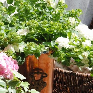 Jest śliczna,nie lubię jednak ich skubać z przekwitniętych kwiatów:(