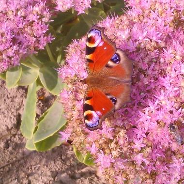 cd.kwiaty mojej małej oazy