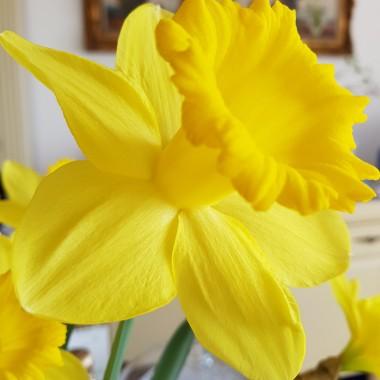 Minęły Święta Wielkanocne ale wiosna trwa nadal :) mamy więcej słońca i zieleni, jest corz bardziej kolorowo. ...Już poświątecznie ale serdecznie życzę Wam zawsze wiosny w sercu i samych coraz barwniejszych oraz cieplejszych dni.