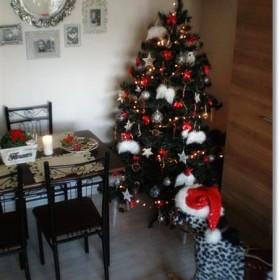 Święta,święta...:)))