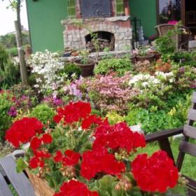 niedzielny,pochmurny,zimny,majowy poranek też może być piękny&#x3B;-)