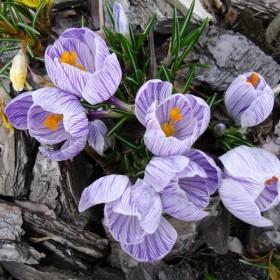 Marzec i początek kwietnia w ogrodzie...