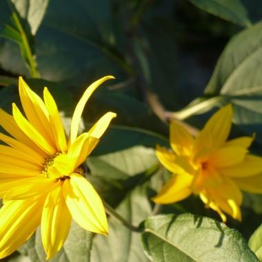 ...............i  kwiaty.............w słońcu się złocą.............