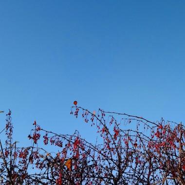..............i dzisiejsza jesienna fotka..............