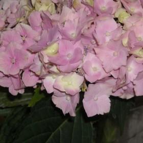 Kwiaty.......................