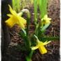 Pozostałe, Wszelkie cudowności budzenia się wiosny&#x3B;