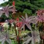 Rośliny, Przywolywanie wiosny :)